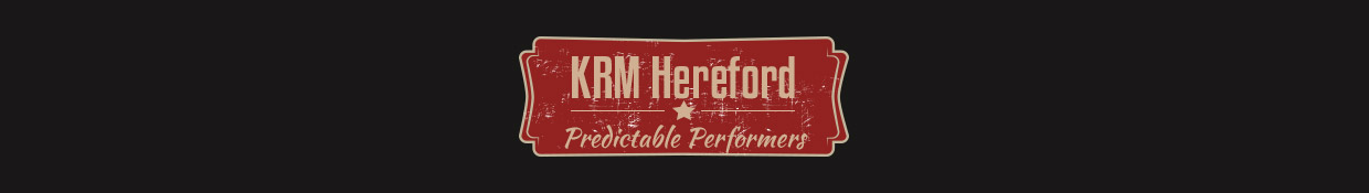 KRM Hereford Stud | Hereford Cattle